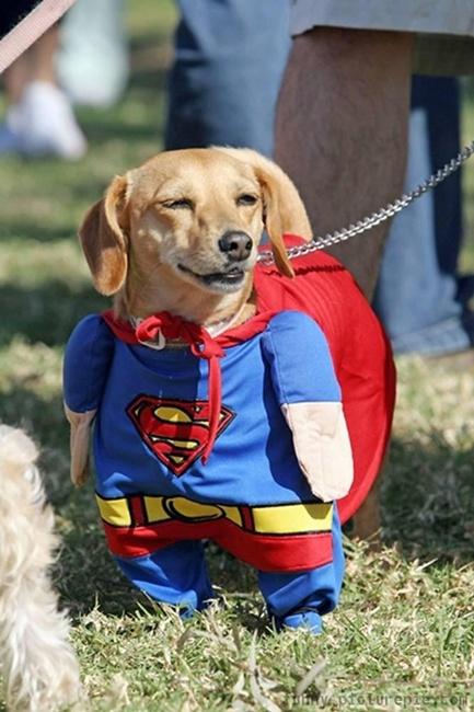 Cún siêu nhân