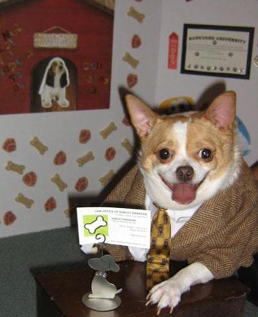 Giáo sư cún.