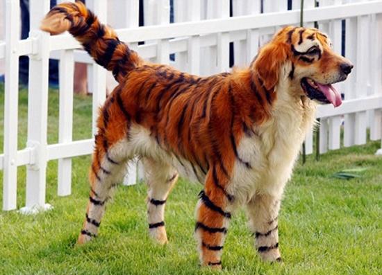 Hổ hay cún đây nhỉ?