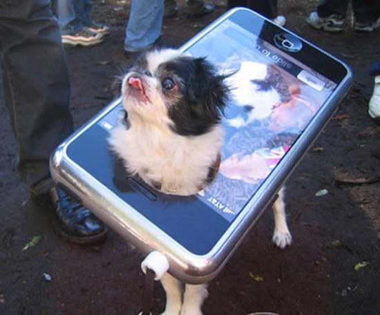 Chủ của chú cún này hẳn là một fan của Iphone.