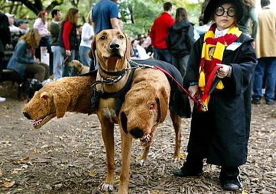 Phải chăng đây chính là chú chó 3 đầu Fluffy của bác Hagrid trong Harry Potter?