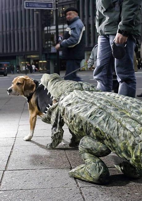 Chú cún này đang làm mồi cho cá sấu?