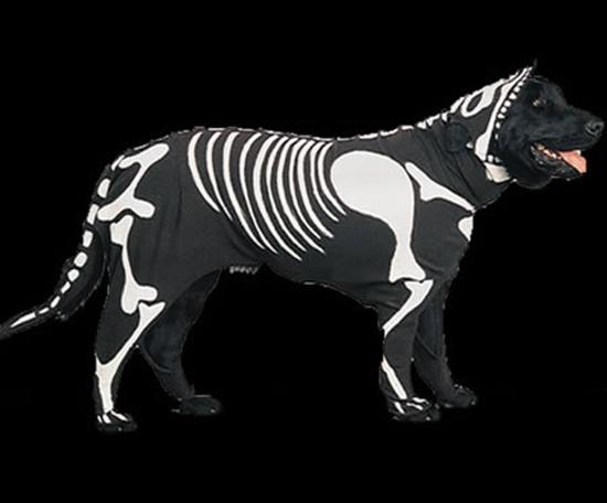 Thời trang X-quang đã phổ biến trong cả giới cún rồi ư?