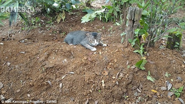Sau khi ăn uống no bụng, chú mèo lại quay trở về khu mộ.