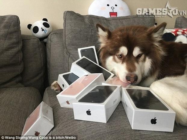 Chú chó Coco bên những chiếc iPhone đời mới nhất. Ảnh: Weibo