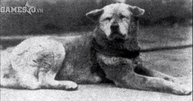 Hình ảnh của chú chó trung thành Hachiko