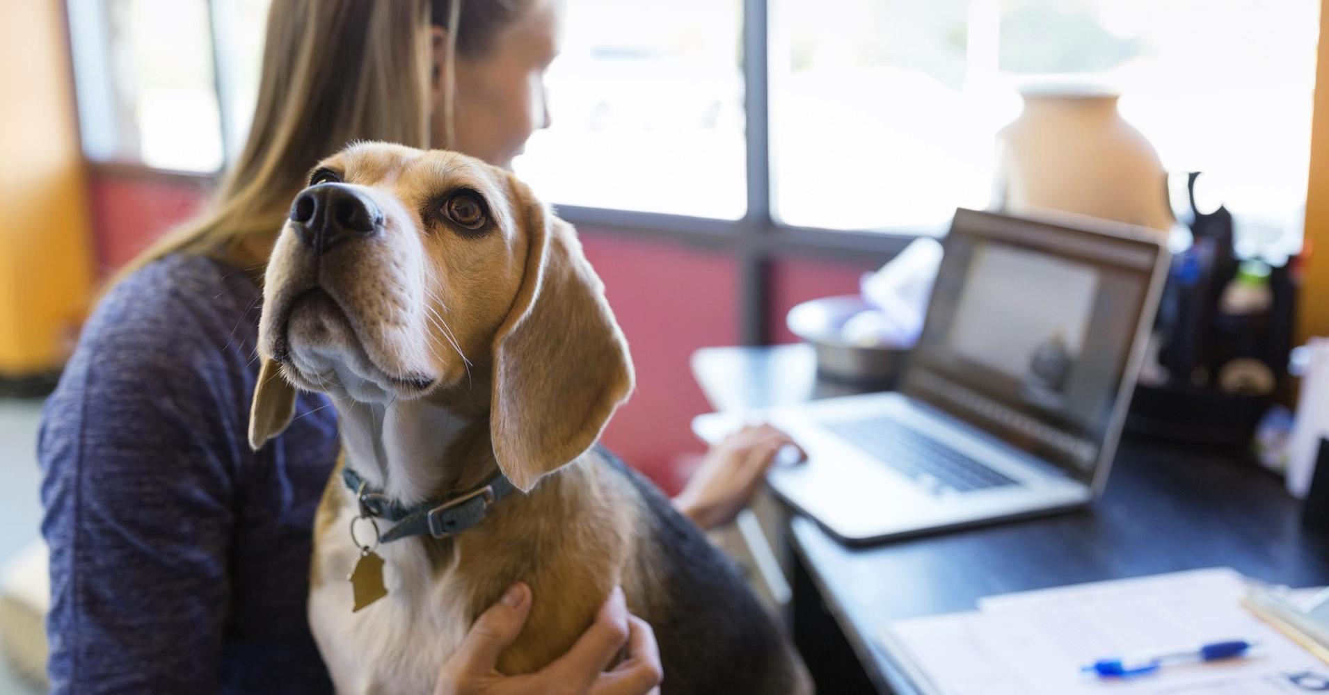 Google Photos giờ đây đã có thể nhận diện được cả thú cưng của bạn